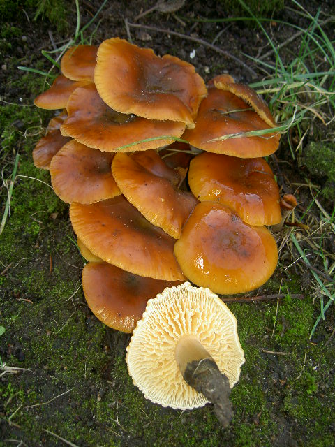 Fabelhaft Pilze im Garten -Bestimmungshilfe - Diskussionen und Meinungen @TO_68